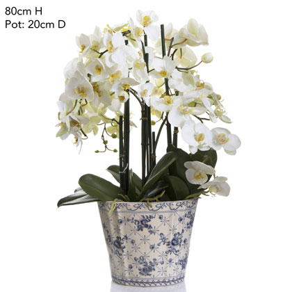 Phal Orchid White In White Blue Chinese Pot